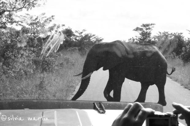 South Africa_Kruger